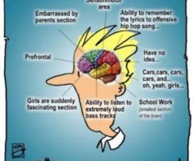 A Look Into the Teenage Brain